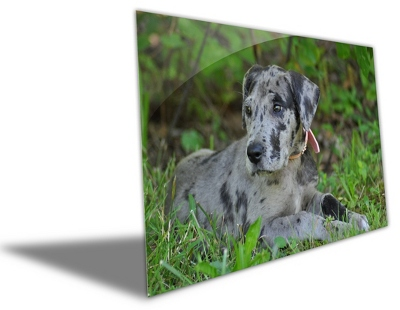 "8"" x 10"" Photo to Brushed Aluminum Art - Anniversary Frames & Albums"